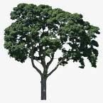 große Bäume SB7