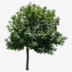 große Bäume SB11