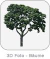 3D Photo - Trees