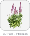 3D Photo - Plants