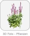 3D Foto - Pflanzen